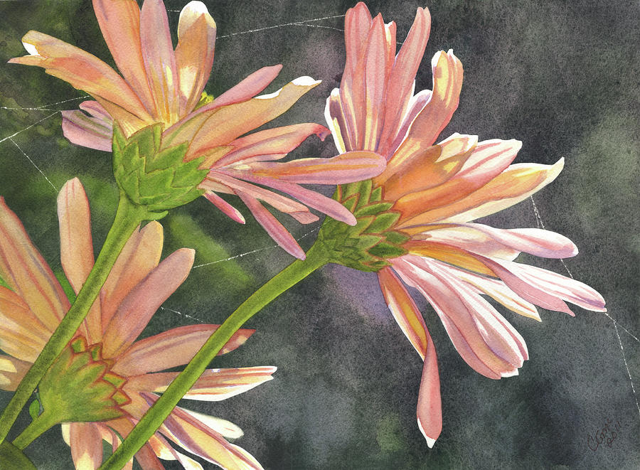 Peach Chrysanthemums by Catherine G McElroy