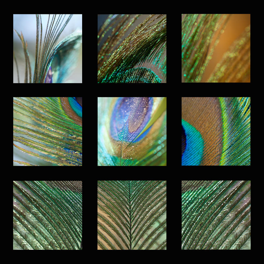 Peacock Feather Mosaic Photograph  - Peacock Feather Mosaic Fine Art Print