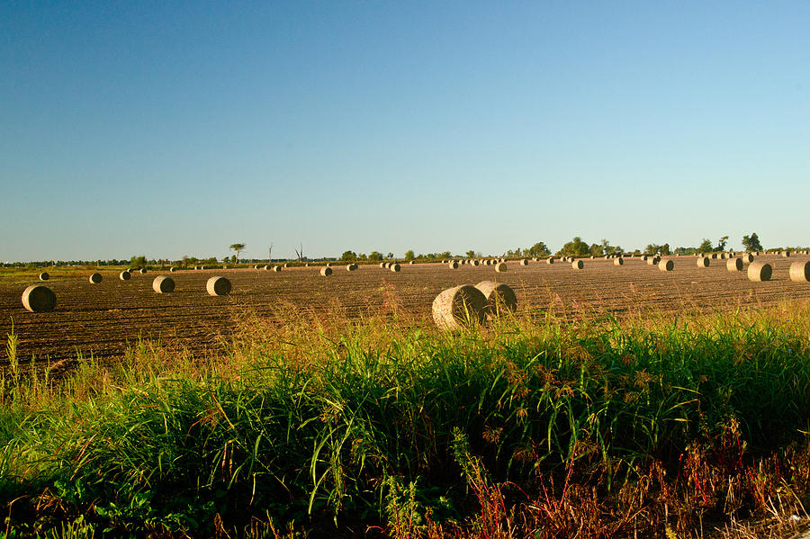 Peanut Bales In Field Photograph