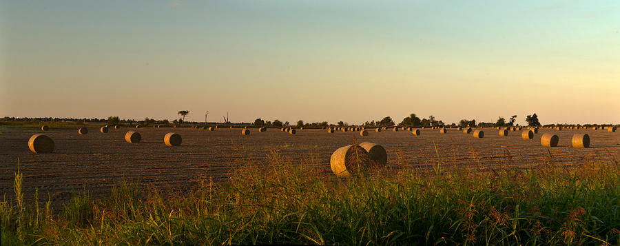 Peanut Photograph - Peanut Field Bales At Dawn 1 by Douglas Barnett