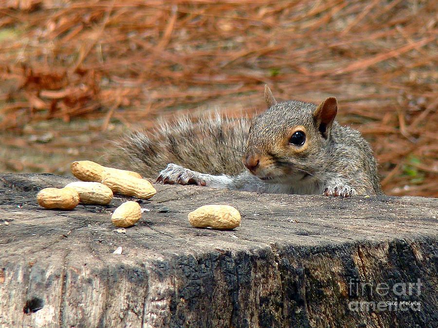 Peanut Surprise Photograph