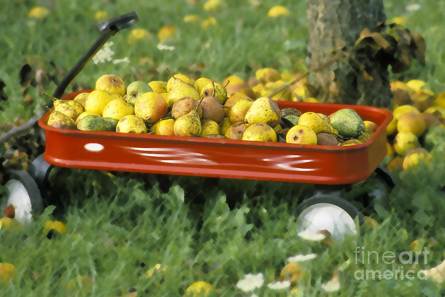 Pears In A Wagon Photograph  - Pears In A Wagon Fine Art Print