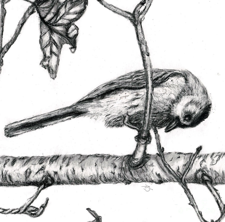 Peek A Boo Bluebird Drawing