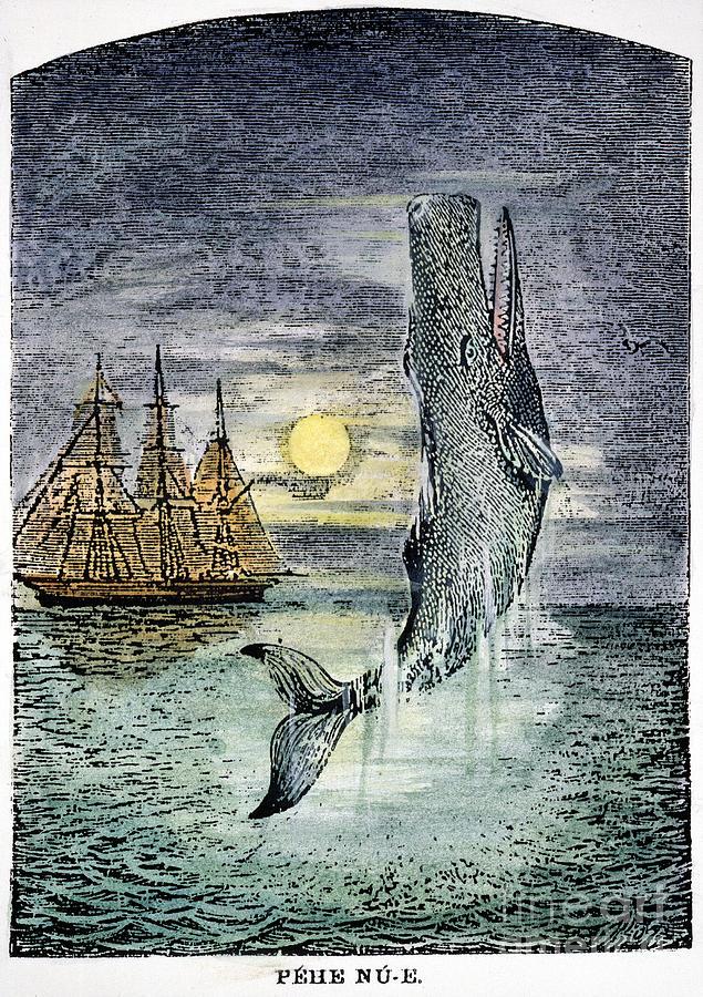 Pehe Nu-e: Moby Dick Photograph