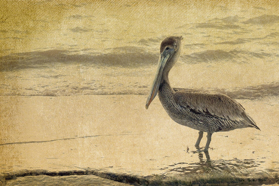 Pelican Photograph - Pelican by Rebecca Cozart