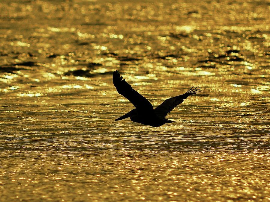 Pelican Silhouette - Golden Gulf Photograph