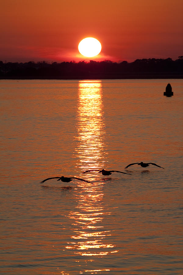 Pelican Sunset Photograph