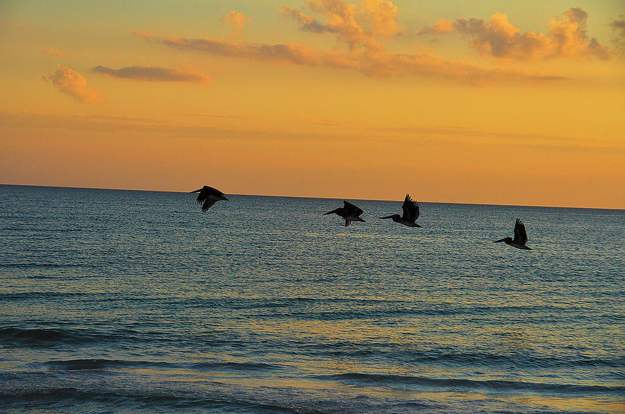 Pelicans At Sunset Photograph  - Pelicans At Sunset Fine Art Print