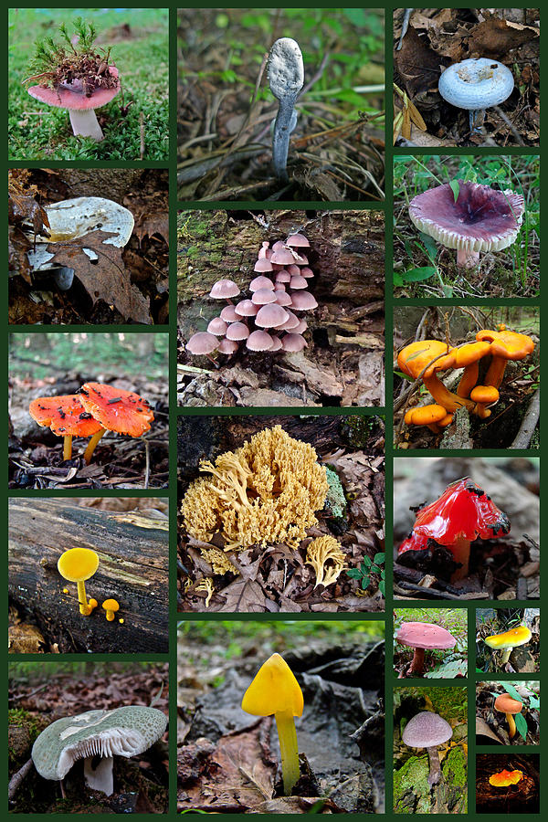 Pennsylvania Mushrooms Collage 2 Photograph  - Pennsylvania Mushrooms Collage 2 Fine Art Print