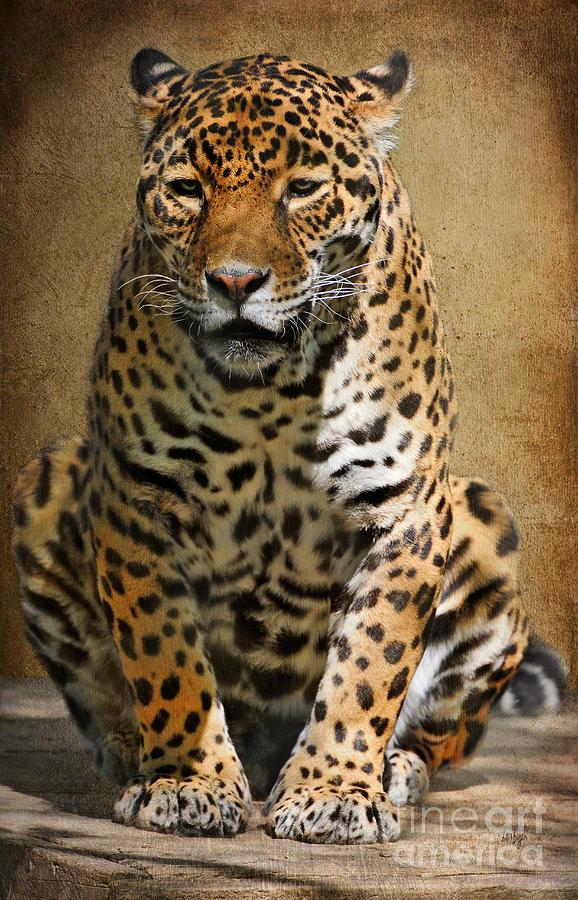 Jaguar Photograph - Pensive by Lois Bryan