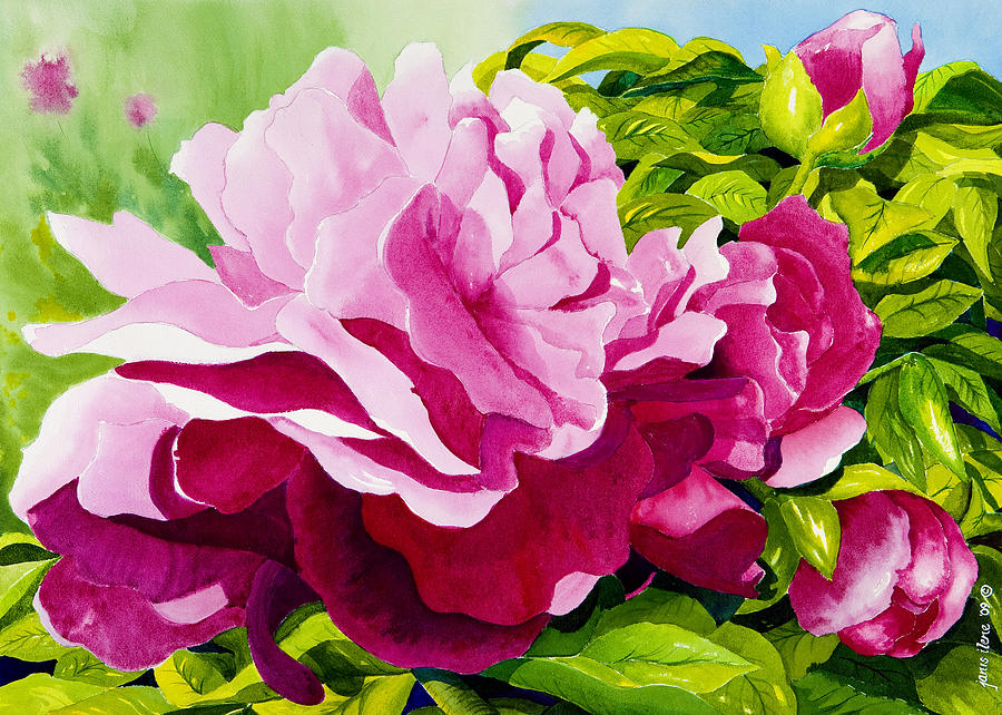 Peonies In Pink Painting  - Peonies In Pink Fine Art Print