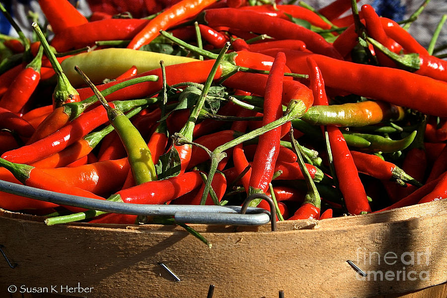 Outdoors Photograph - Peppers And More Peppers by Susan Herber