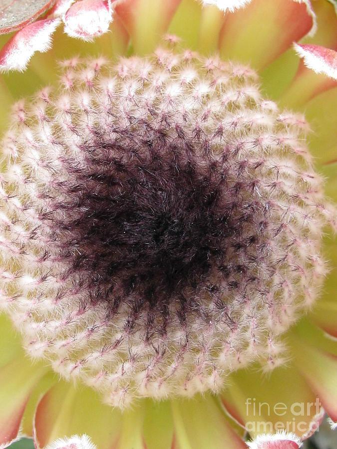 Flower Photograph - Perceptiveness by Tina Marie