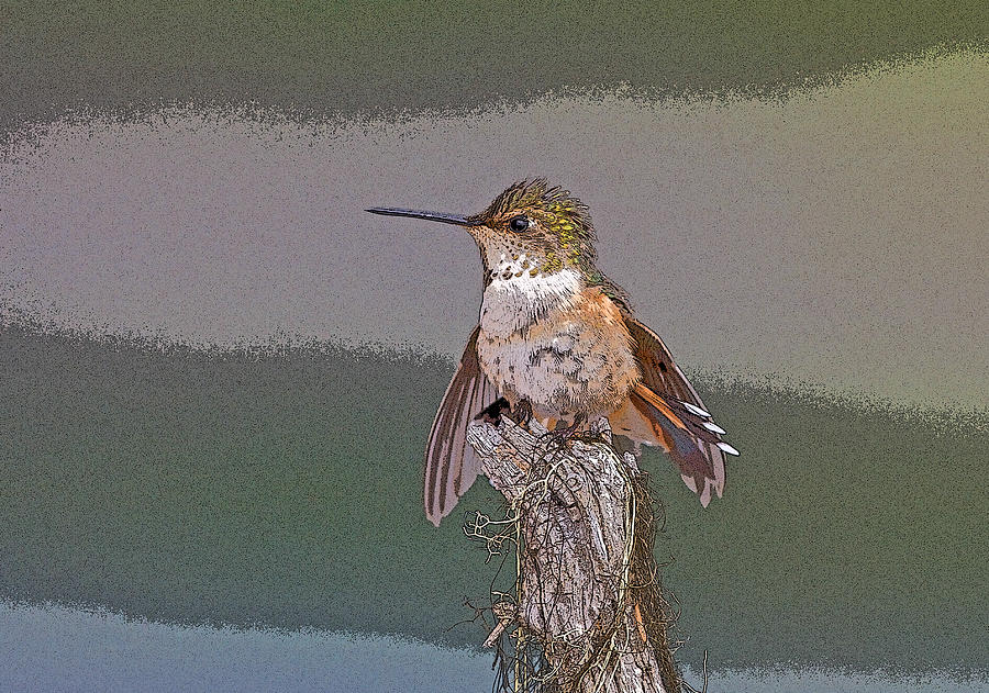Perched Hummingbird- Abstract Digital Art  - Perched Hummingbird- Abstract Fine Art Print