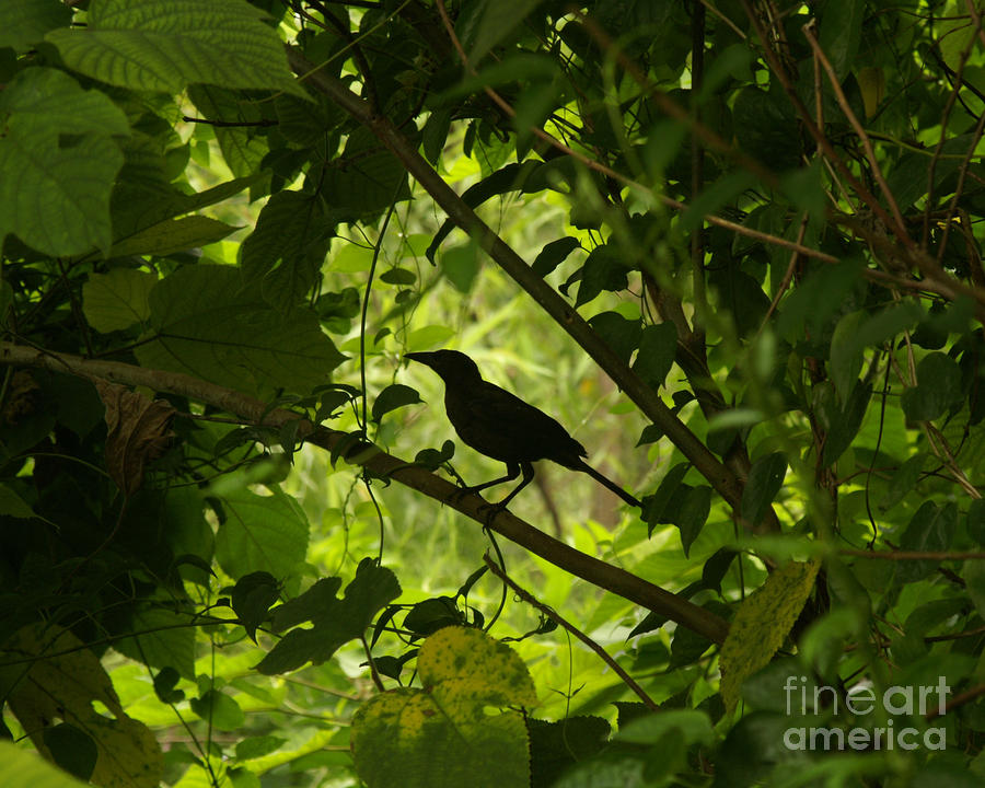 Perched In Green  Photograph  - Perched In Green  Fine Art Print