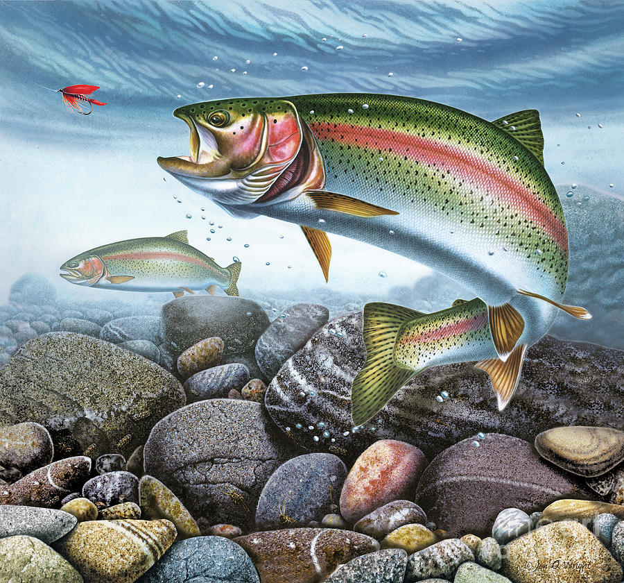 Perfect Drift Rainbow Trout Painting  - Perfect Drift Rainbow Trout Fine Art Print