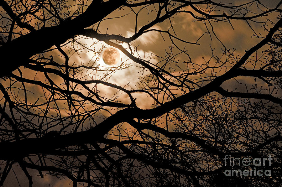 Perigee Moon In The Trees Photograph