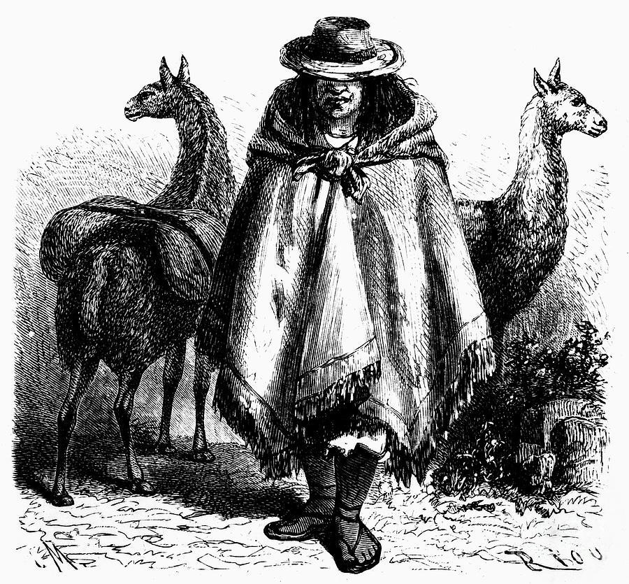 Peru: Llama Driver, 1869 Photograph