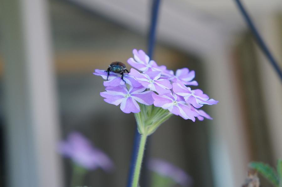 Flower Photograph - Pests by Kristine Bogdanovich
