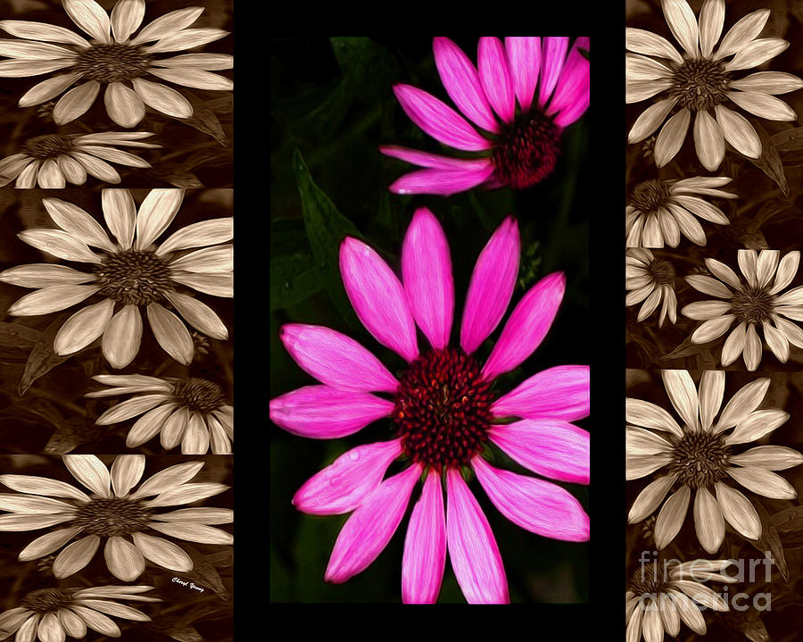 Petal Collage Photograph