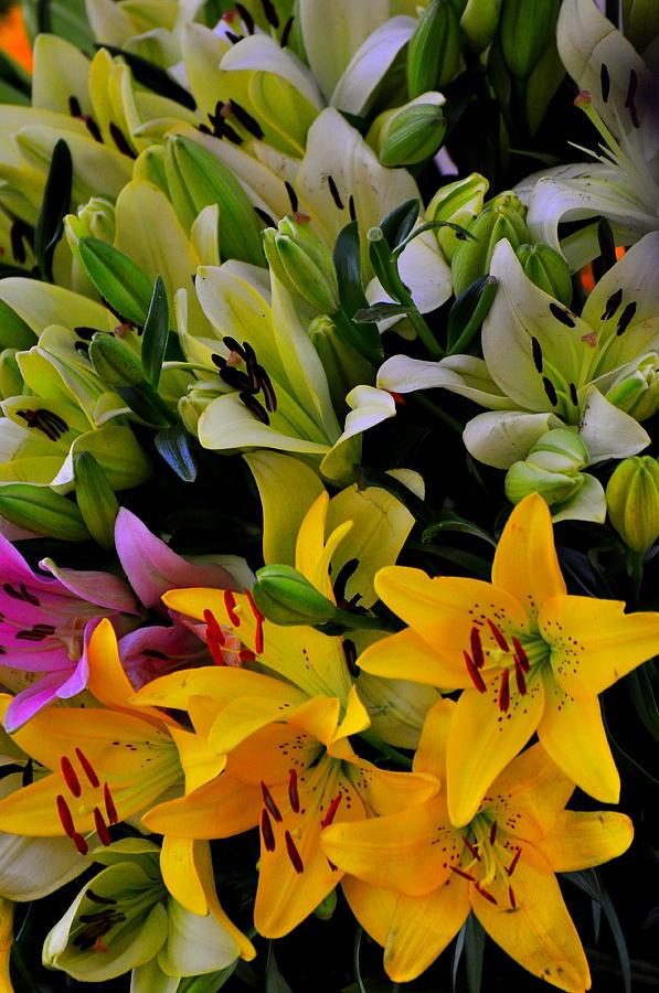 Tulips Pyrography - Petals Everywhere by Mrutyunjaya Dash