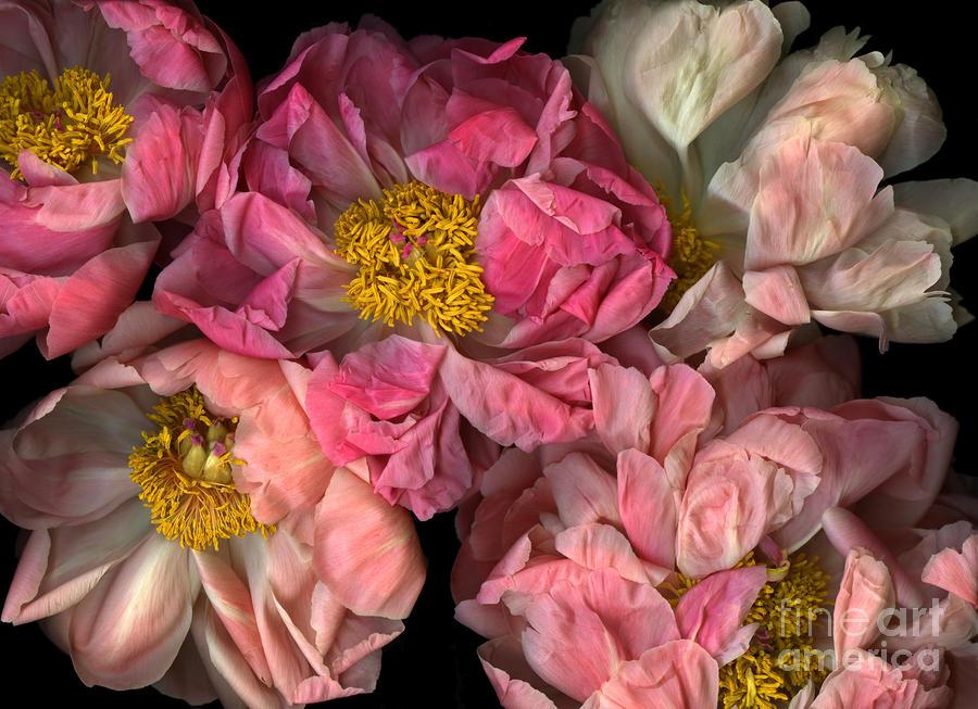 Petticoats Photograph