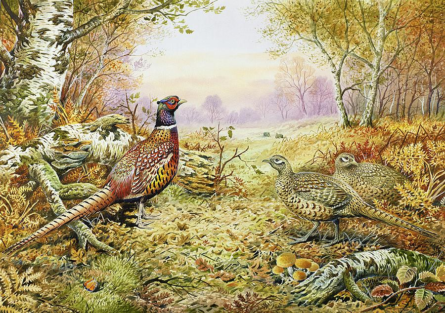 Pheasants In Woodland Painting  - Pheasants In Woodland Fine Art Print
