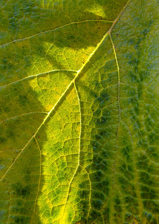 Photosynthesis In Progress Photograph  - Photosynthesis In Progress Fine Art Print