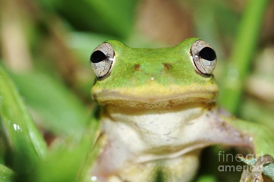 Tree Frog Photograph - Phyl by Lynda Dawson-Youngclaus