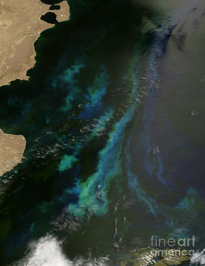 Argentina Photograph - Phytoplankton Off Argentinas Coast by Nasa