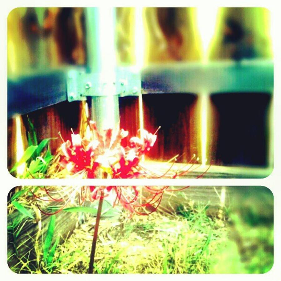 Random Photograph - #picframe #nature #random by Kel Hill