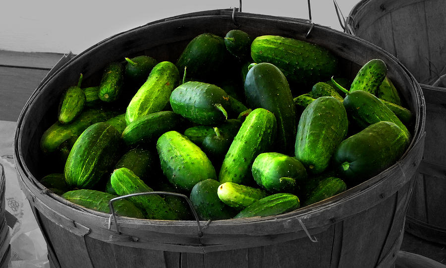 Pickling Cucumbers Photograph  - Pickling Cucumbers Fine Art Print