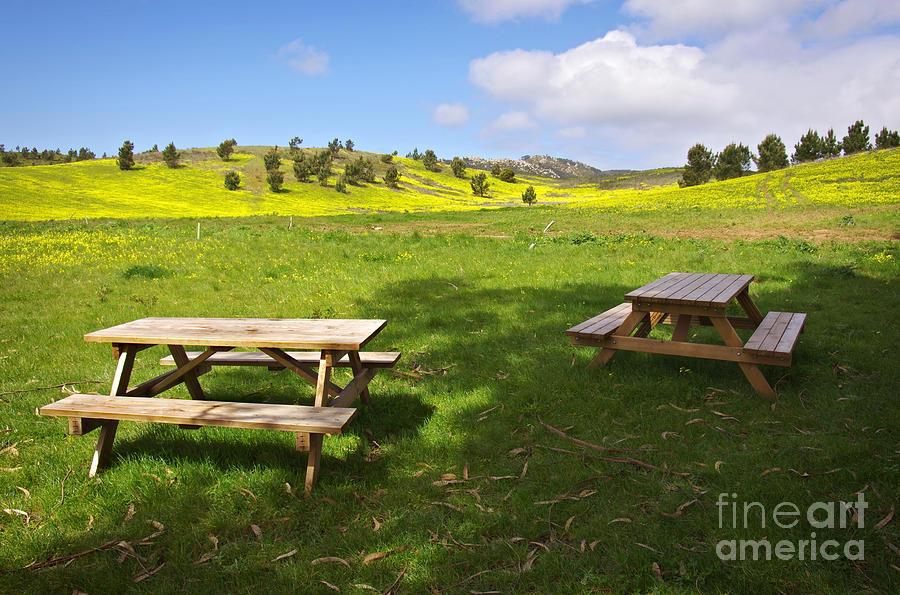 Picnic Tables Photograph