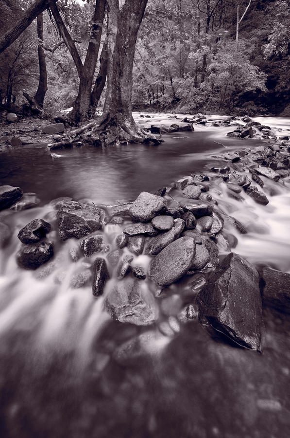 Pigeon Forge River Great Smoky Mountains Bw Photograph