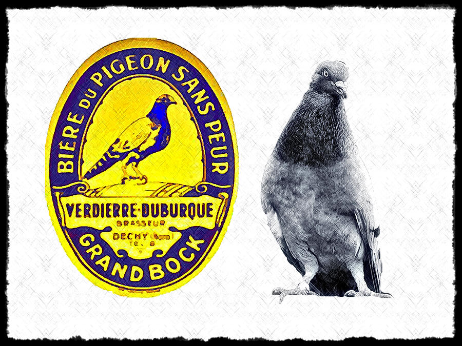 Pigeon Grand Bock Photograph  - Pigeon Grand Bock Fine Art Print