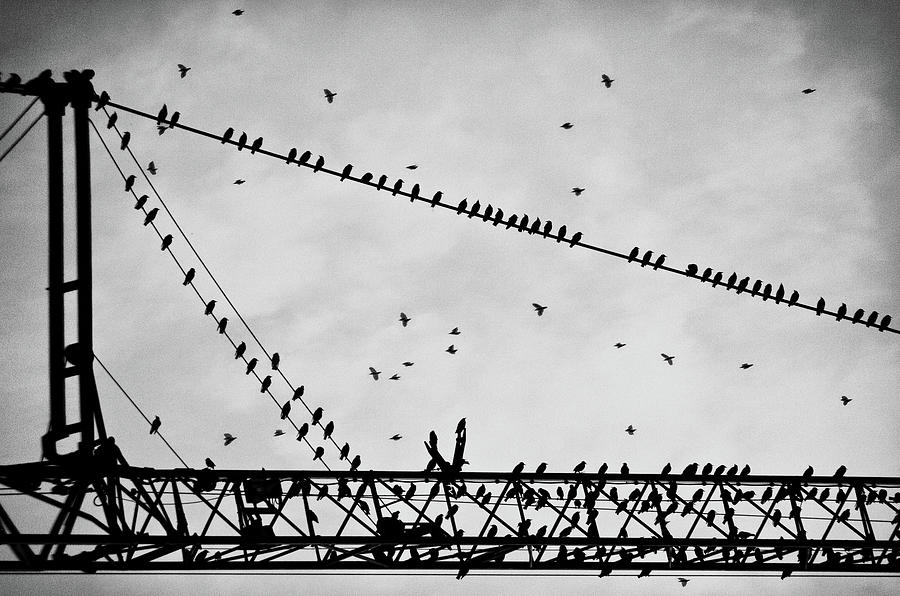 Pigeons Sitting On Building Crane And Flying Photograph