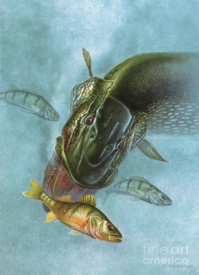 Pike And Perch Painting  - Pike And Perch Fine Art Print