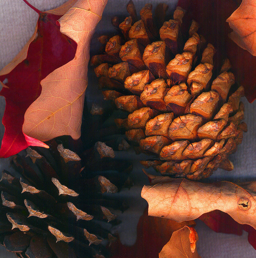 Pine Cones And Leaves Photograph