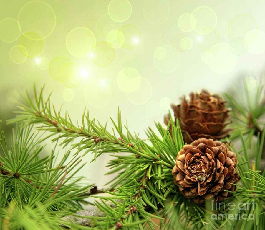 Branch Photograph - Pine Cones On Branches With Holiday Background by Sandra Cunningham