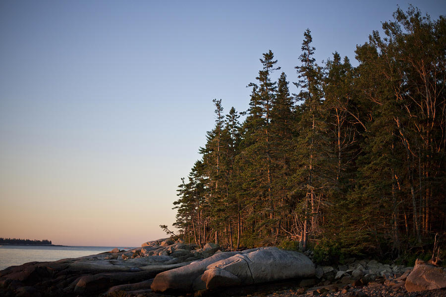Pine Trees Along The Rocky Coastline Photograph