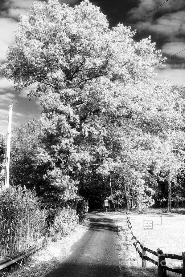 Piney Road Photograph