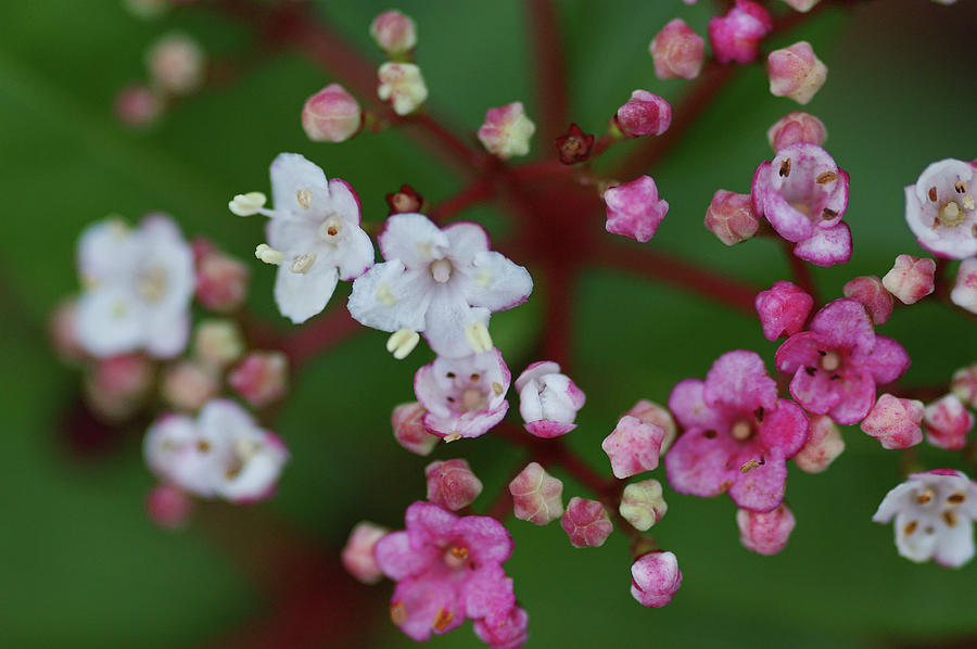 Pink And White Flowers Photograph