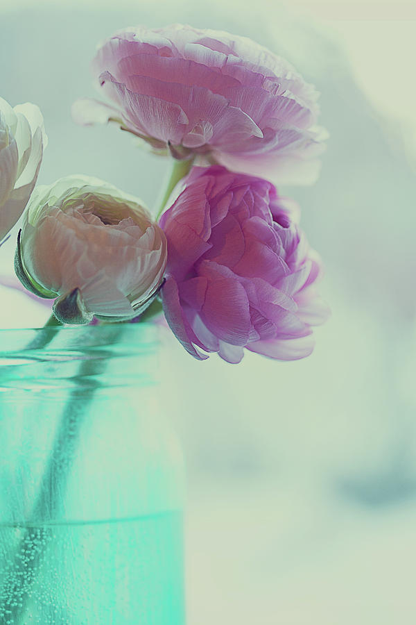Pink And White Ranunculus Flowers In Vase Photograph