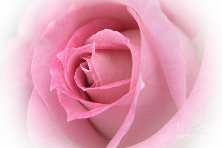pink english