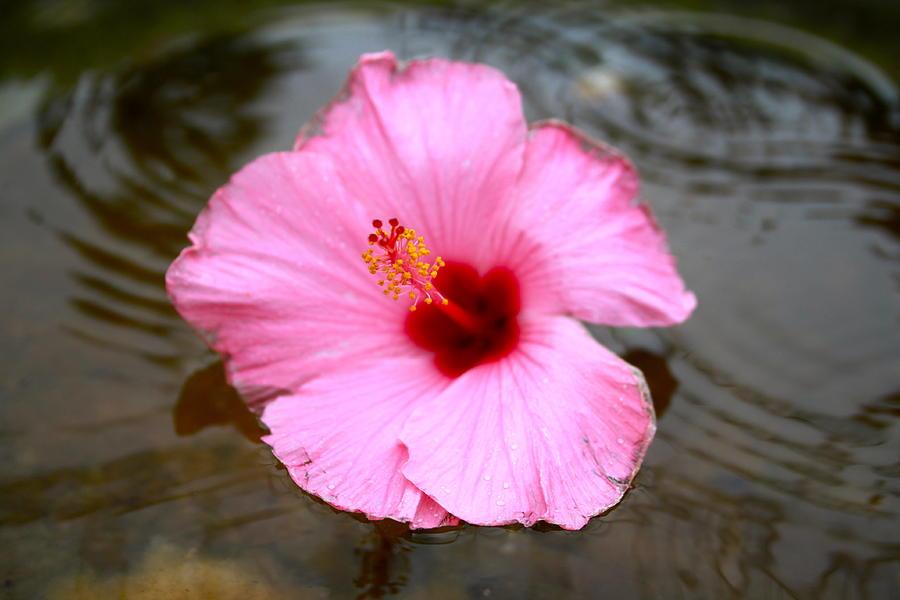 Pink Flower Photograph
