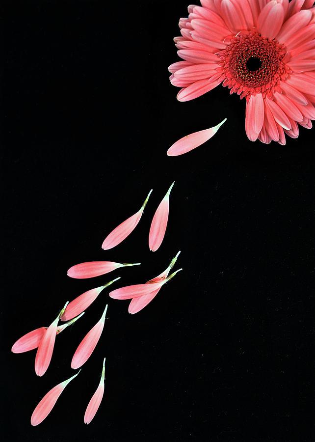 Vertical Photograph - Pink Flower With Petals by Photo by Bhaskar Dutta
