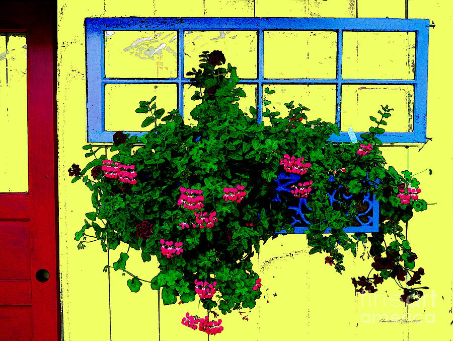 Pink Geraniums In Blue Windowbox - Paintograph Photograph