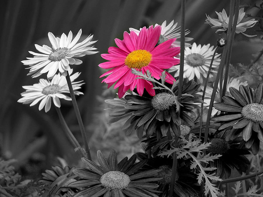 Pink in black and white is a piece of digital artwork by stuart
