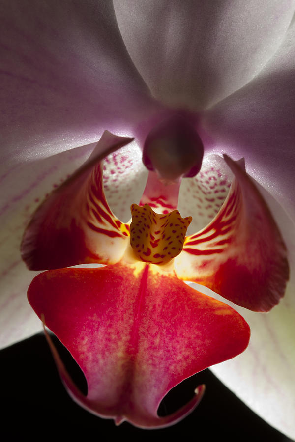 pink orchids close up - photo #38