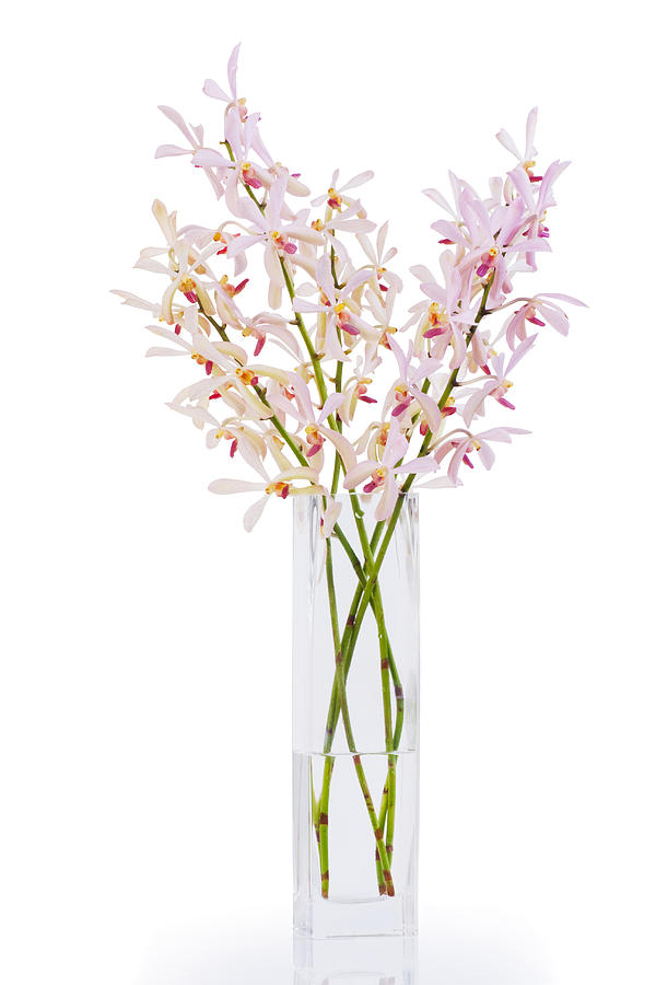 Pink Orchid In Vase Photograph